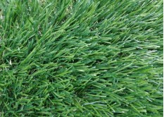 Искусственная трава Premium Natural 50 мм