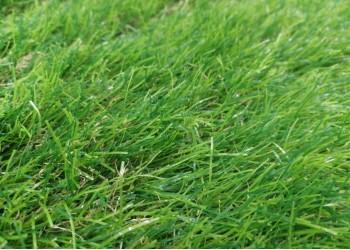Искусственная трава Premium Soft 35 мм